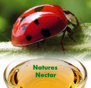 Live-Ladybugs-Hirts-Gardens-Approximately-1550-Plus-Hirts-Nature-NectarTM-0